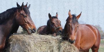 Wir bieten die bunte Vielfalt  –   Balios Premium-Futtermittel für Ihr Pferd