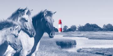 Seminar: Natürliche Fütterung von Pferden via Zoom
